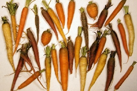 Carotene e160a Primary Source Carrots